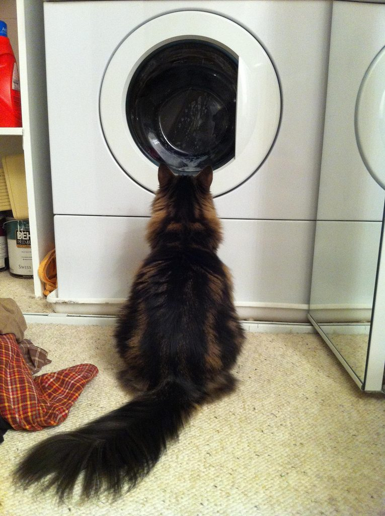 A cat watches the laundry machine