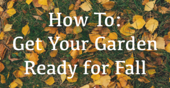 10 Ways to Prep Your Garden for Fall