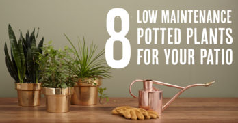 8 Low Maintenance Potted Plants for Your Patio