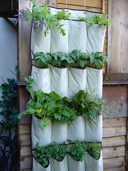 Vertical gardens can come in a variety of containers, like these lovely canvas bags