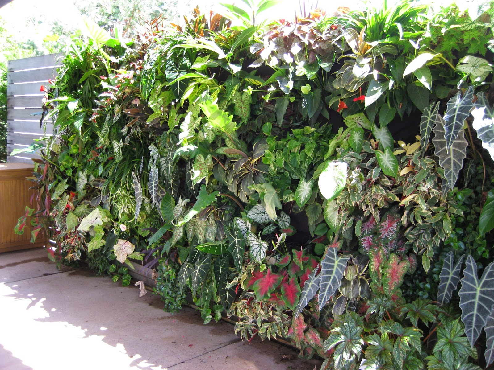 learn how to build a vertical garden