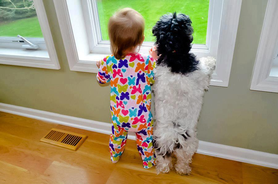 Cute kids with dogs