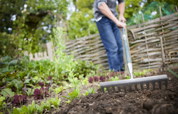 6 Tips to Eliminate Weeds in Your Garden