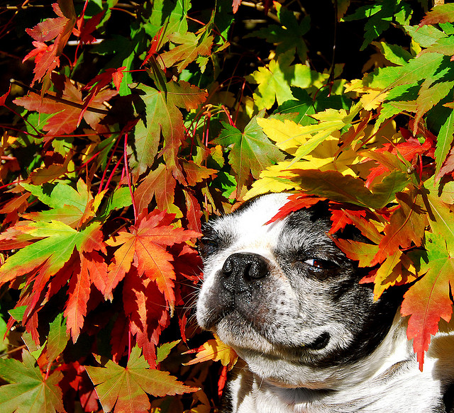 fall dog patio leaves life living activities tips advice how to outdoor backyard