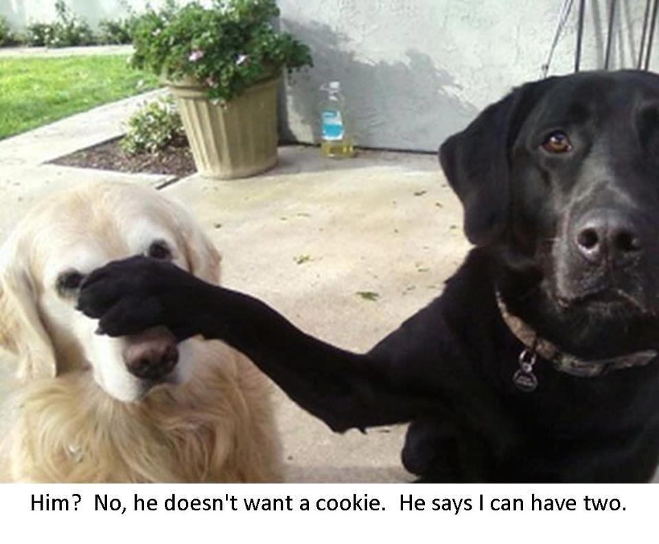 Funny Dogs and Cookies