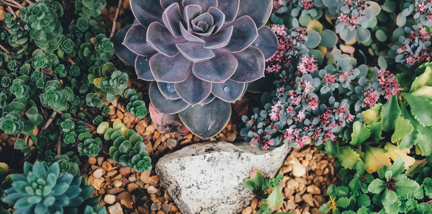 Pro Tips For Succulent Care During Winter