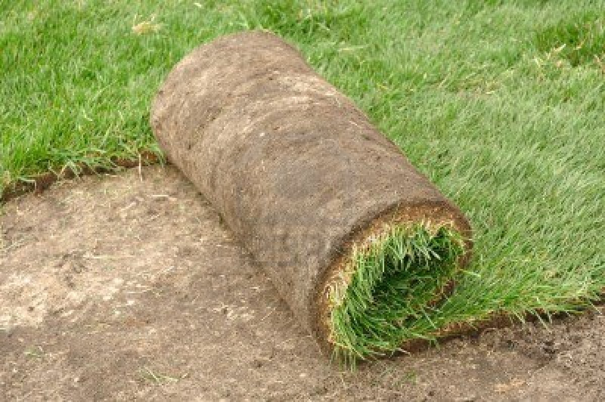 To Sod, or to Seed, that is the Question!